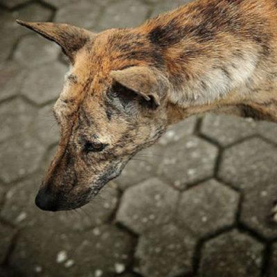 Украинцы, которые застряли на Бали, сравнили себя с брошенными собаками
